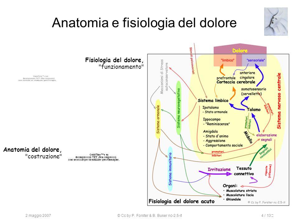 Anatomia e fisiologia del dolore