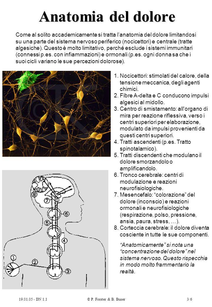 Anatomia del dolore