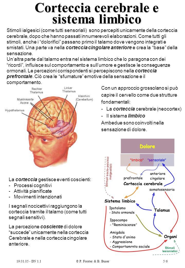 Corteccia cerebrale e sistema limbico