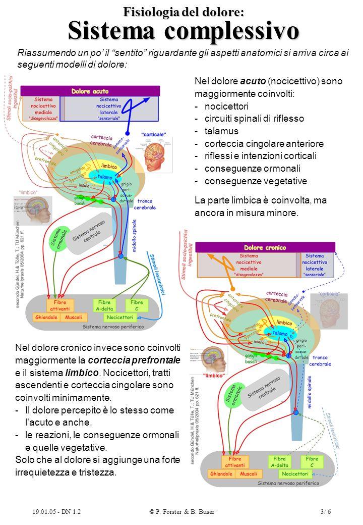 Fisiologia del dolore: Sistema complessivo