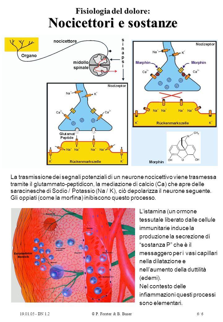 Fisiologia del dolore: Nocicettori e sostanze
