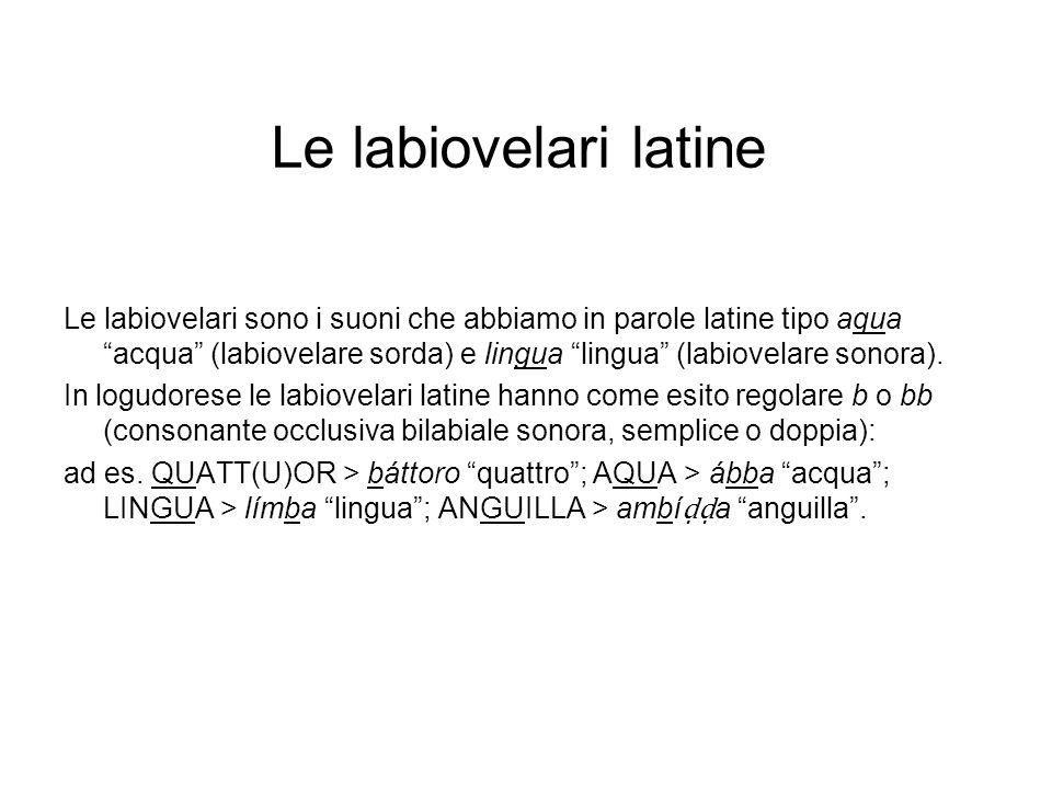 Le labiovelari latine