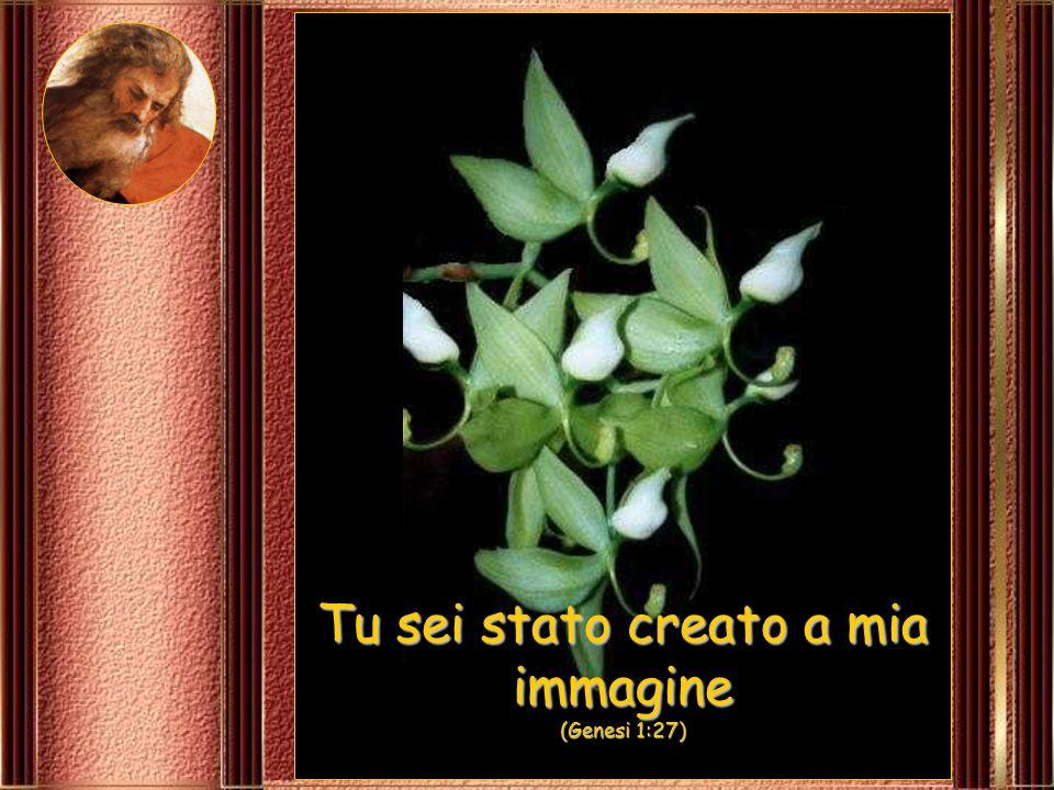 Tu sei stato creato a mia immagine (Genesi 1:27)
