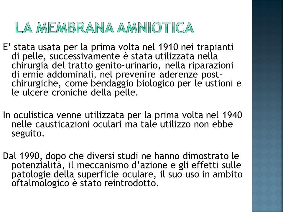 La membrana amniotica