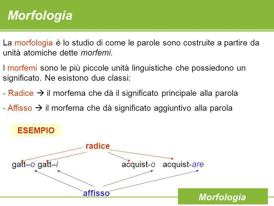 Morfologia Morfologia