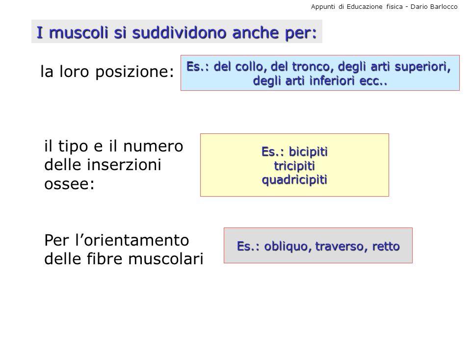 I muscoli si suddividono anche per:
