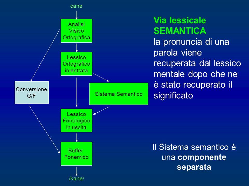 Il Sistema semantico è una componente separata