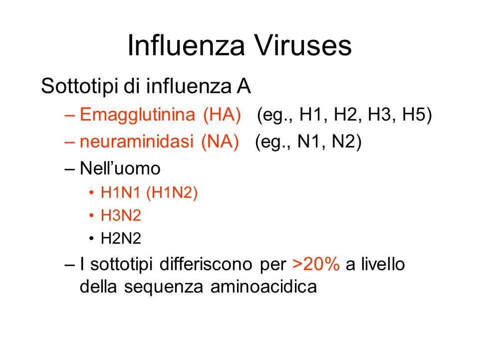 Influenza Viruses Sottotipi di influenza A