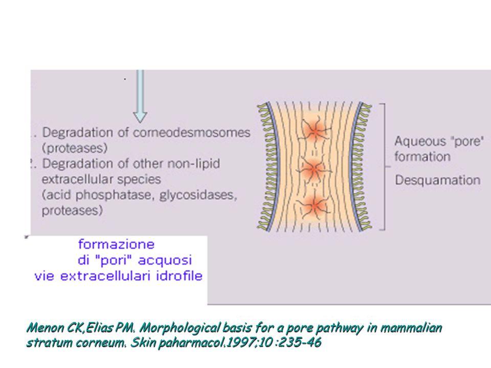 Menon CK,Elias PM. Morphological basis for a pore pathway in mammalian stratum corneum.