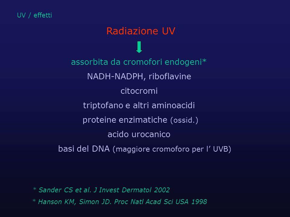 assorbita da cromofori endogeni* NADH-NADPH, riboflavine citocromi