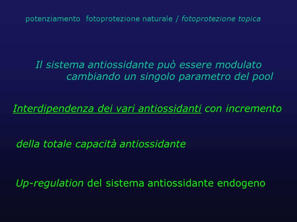 Interdipendenza dei vari antiossidanti con incremento