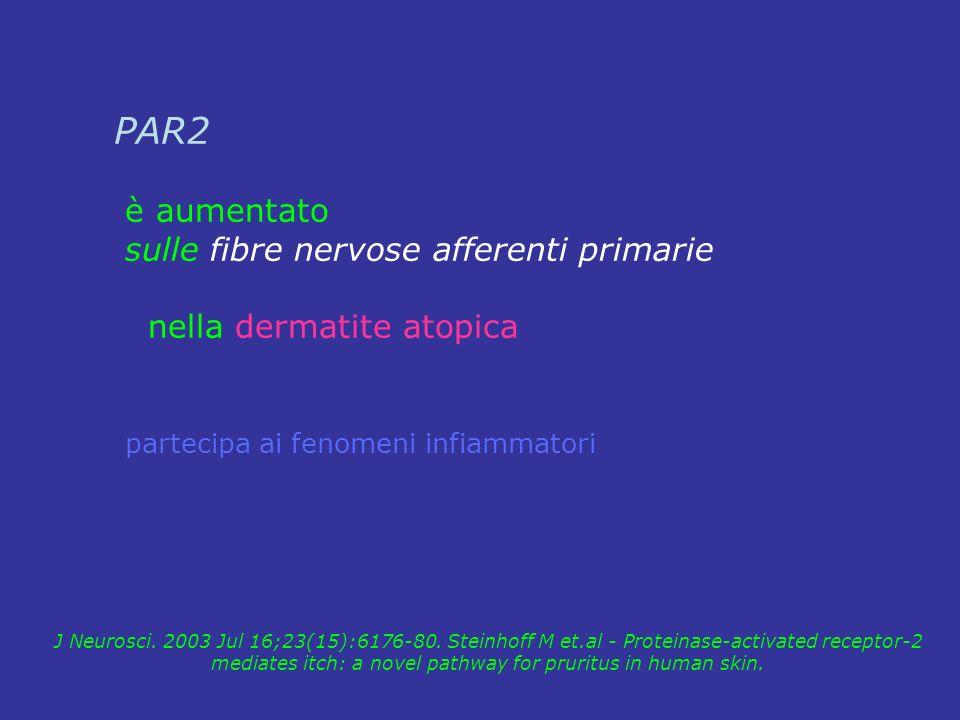 PAR2 è aumentato sulle fibre nervose afferenti primarie