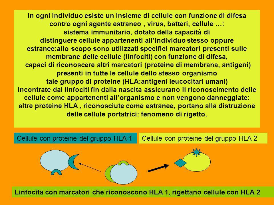 In ogni individuo esiste un insieme di cellule con funzione di difesa contro ogni agente estraneo , virus, batteri, cellule …: sistema immunitario, dotato della capacità di distinguere cellule appartenenti all'individuo stesso oppure estranee:allo scopo sono utilizzati specifici marcatori presenti sulle membrane delle cellule (linfociti) con funzione di difesa, capaci di riconoscere altri marcatori (proteine di membrana, antigeni) presenti in tutte le cellule dello stesso organismo tale gruppo di proteine (HLA:antigeni leucocitari umani) incontrate dai linfociti fin dalla nascita assicurano il riconoscimento delle cellule come appartenenti all'organismo e non vengono danneggiate: altre proteine HLA , riconosciute come estranee, portano alla distruzione delle cellule portatrici: fenomeno di rigetto.