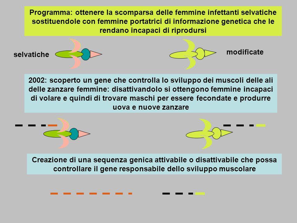Programma: ottenere la scomparsa delle femmine infettanti selvatiche sostituendole con femmine portatrici di informazione genetica che le rendano incapaci di riprodursi