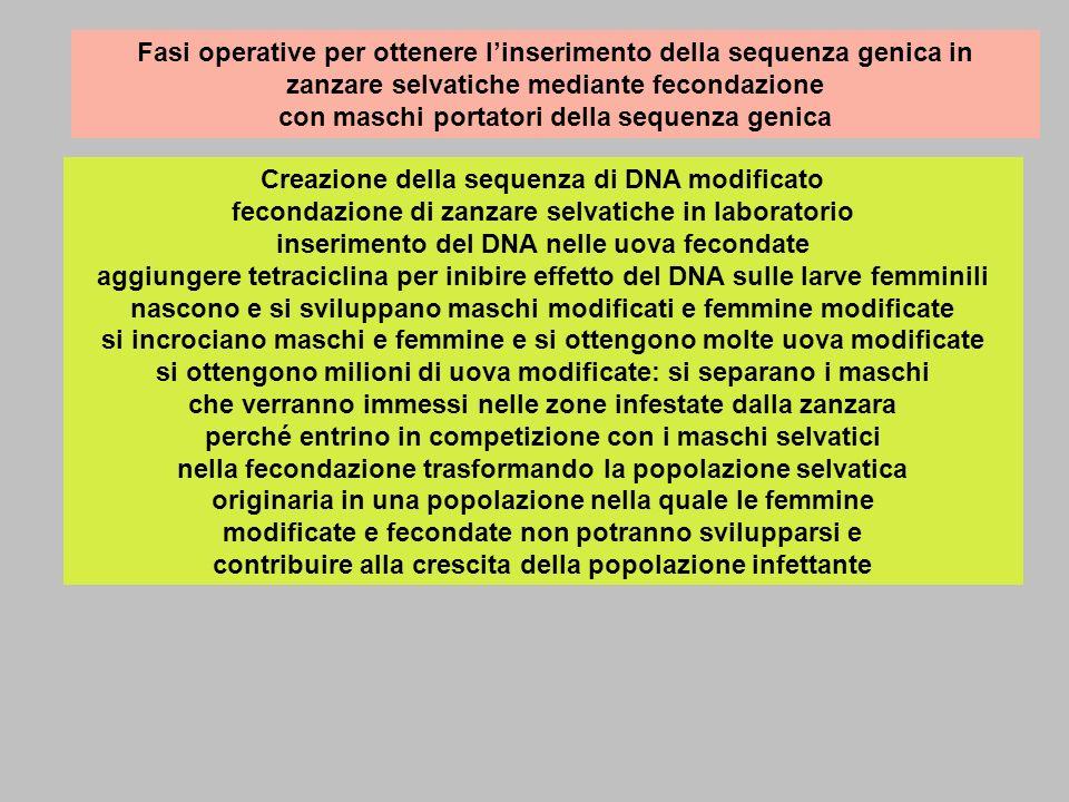 Fasi operative per ottenere l'inserimento della sequenza genica in zanzare selvatiche mediante fecondazione con maschi portatori della sequenza genica