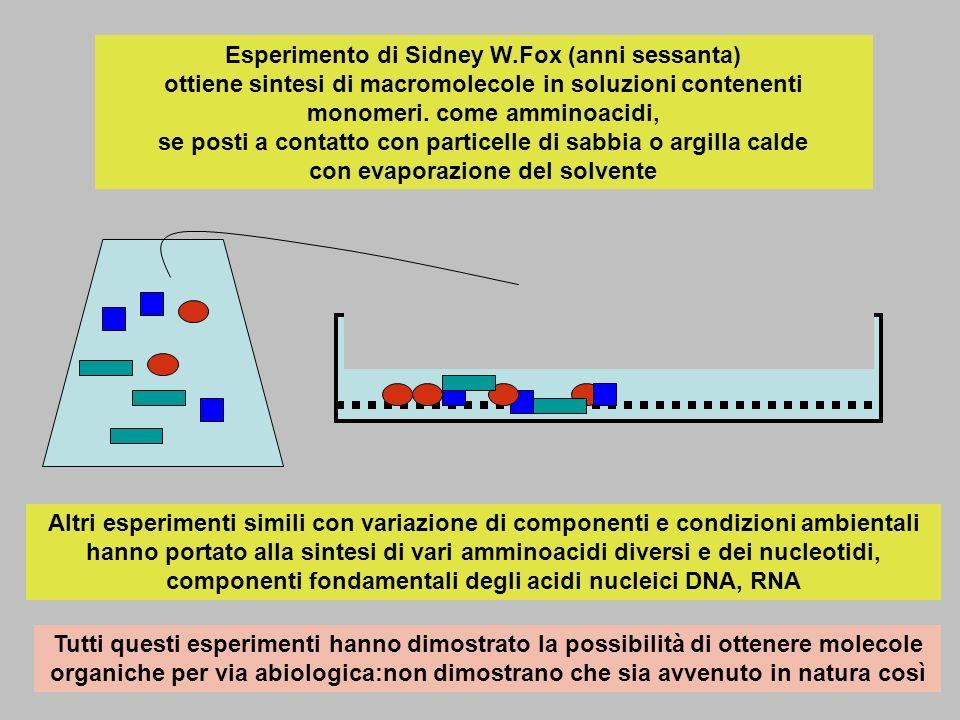 Esperimento di Sidney W
