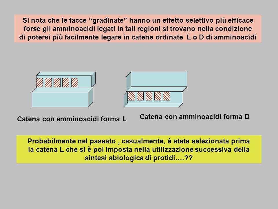 Si nota che le facce gradinate hanno un effetto selettivo più efficace forse gli amminoacidi legati in tali regioni si trovano nella condizione di potersi più facilmente legare in catene ordinate L o D di amminoacidi