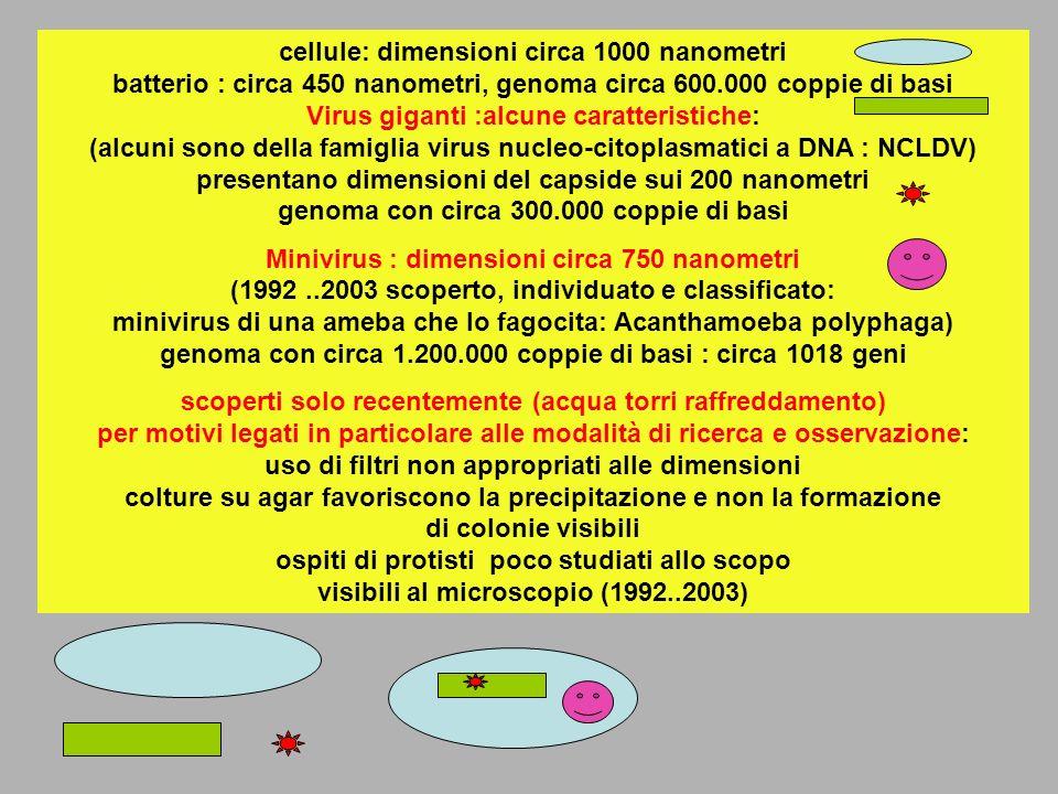 cellule: dimensioni circa 1000 nanometri batterio : circa 450 nanometri, genoma circa 600.000 coppie di basi Virus giganti :alcune caratteristiche: (alcuni sono della famiglia virus nucleo-citoplasmatici a DNA : NCLDV) presentano dimensioni del capside sui 200 nanometri genoma con circa 300.000 coppie di basi