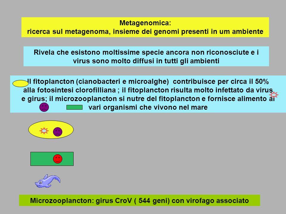 Microzooplancton: girus CroV ( 544 geni) con virofago associato