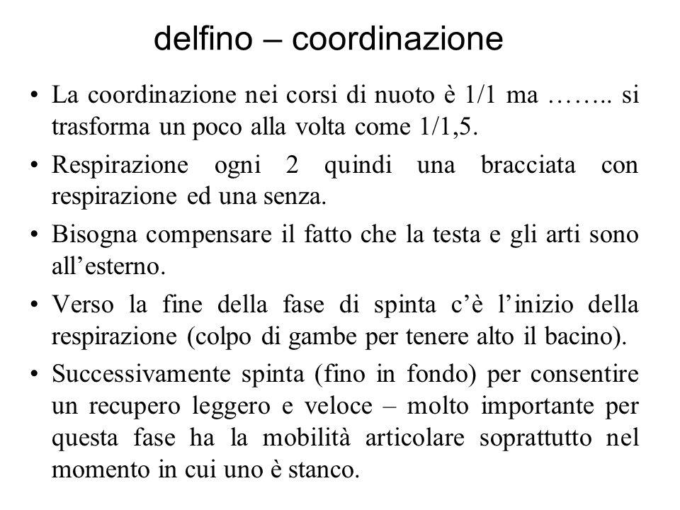 delfino – coordinazione