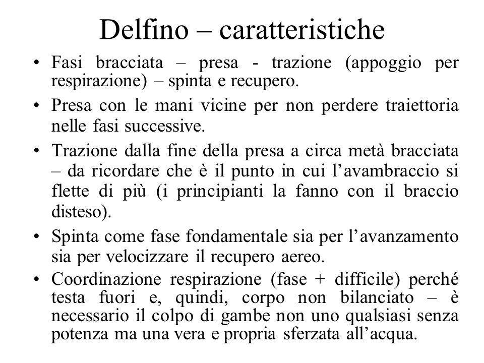 Delfino – caratteristiche