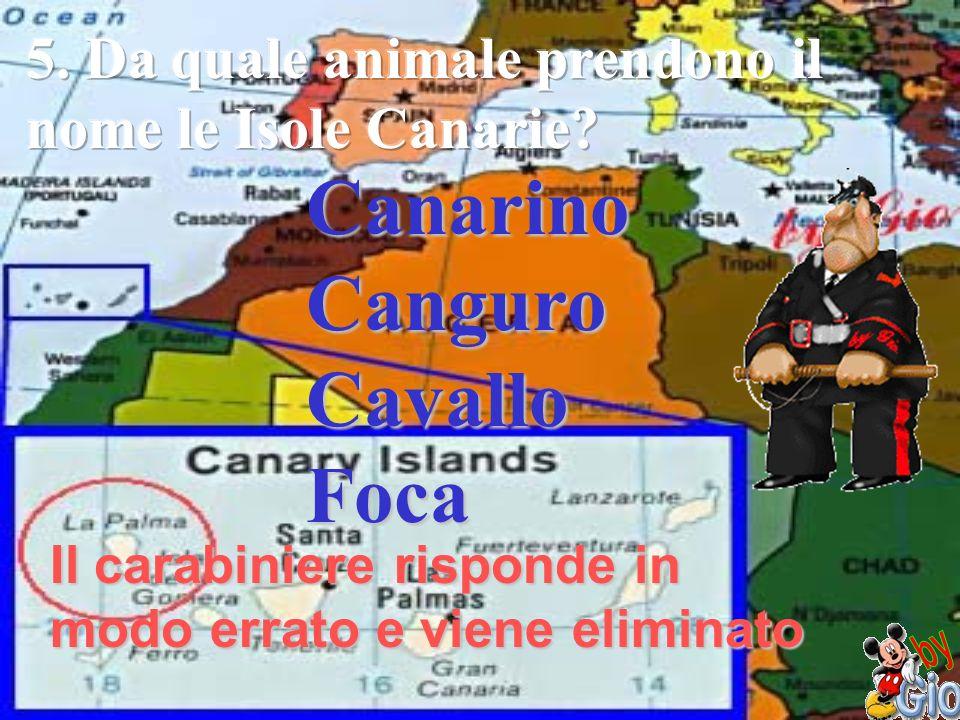 Canarino Canguro Cavallo Foca