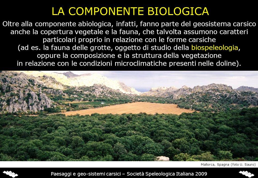 LA COMPONENTE BIOLOGICA