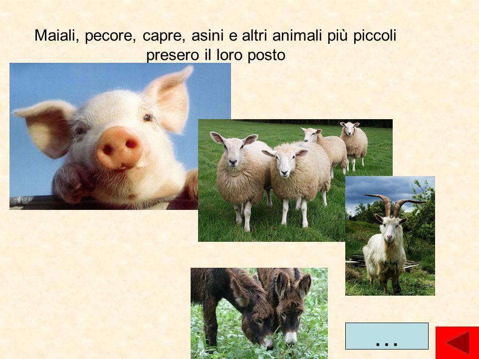 Maiali, pecore, capre, asini e altri animali più piccoli presero il loro posto
