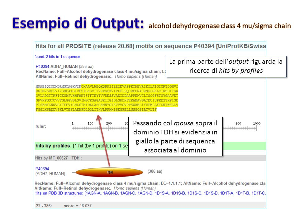 Esempio di Output: alcohol dehydrogenase class 4 mu/sigma chain