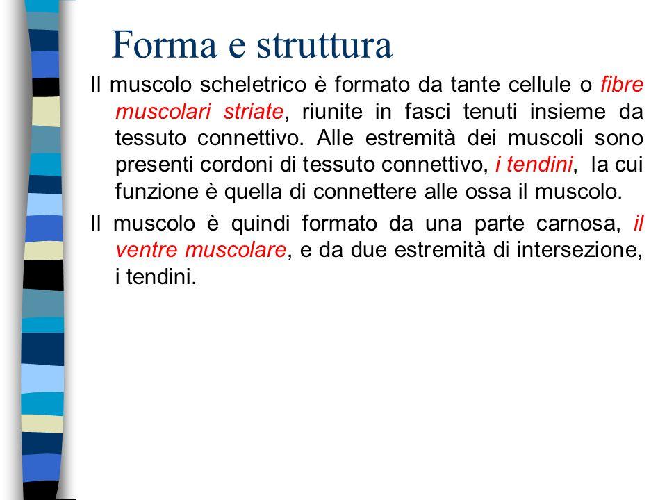 Forma e struttura