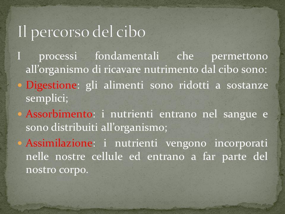 Il percorso del cibo I processi fondamentali che permettono all'organismo di ricavare nutrimento dal cibo sono: