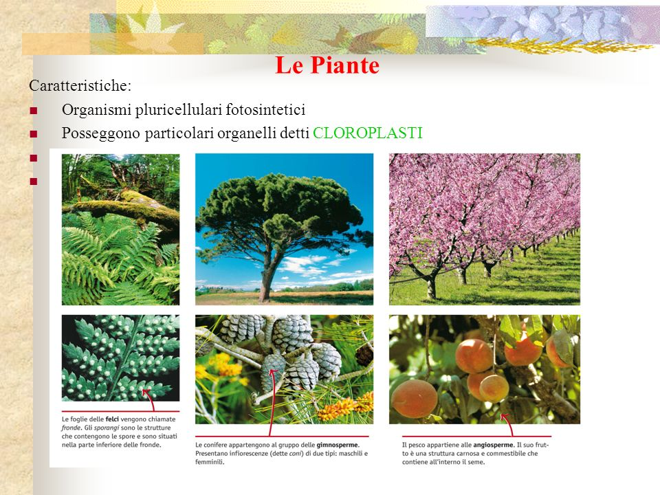 Le Piante Caratteristiche: Organismi pluricellulari fotosintetici