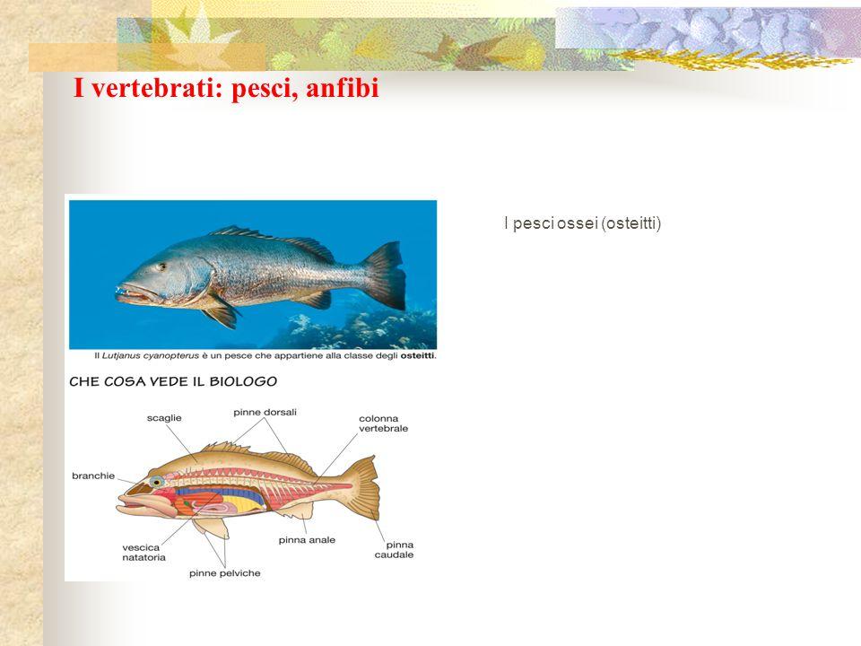 I vertebrati: pesci, anfibi