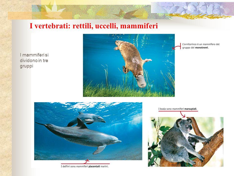 I vertebrati: rettili, uccelli, mammiferi