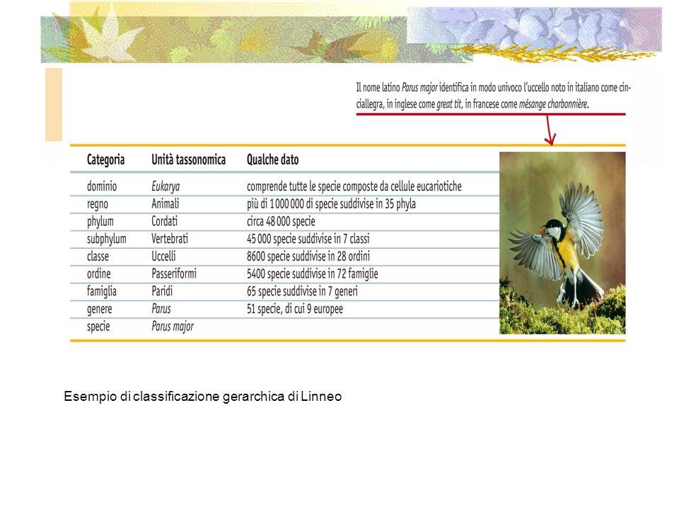 Esempio di classificazione gerarchica di Linneo