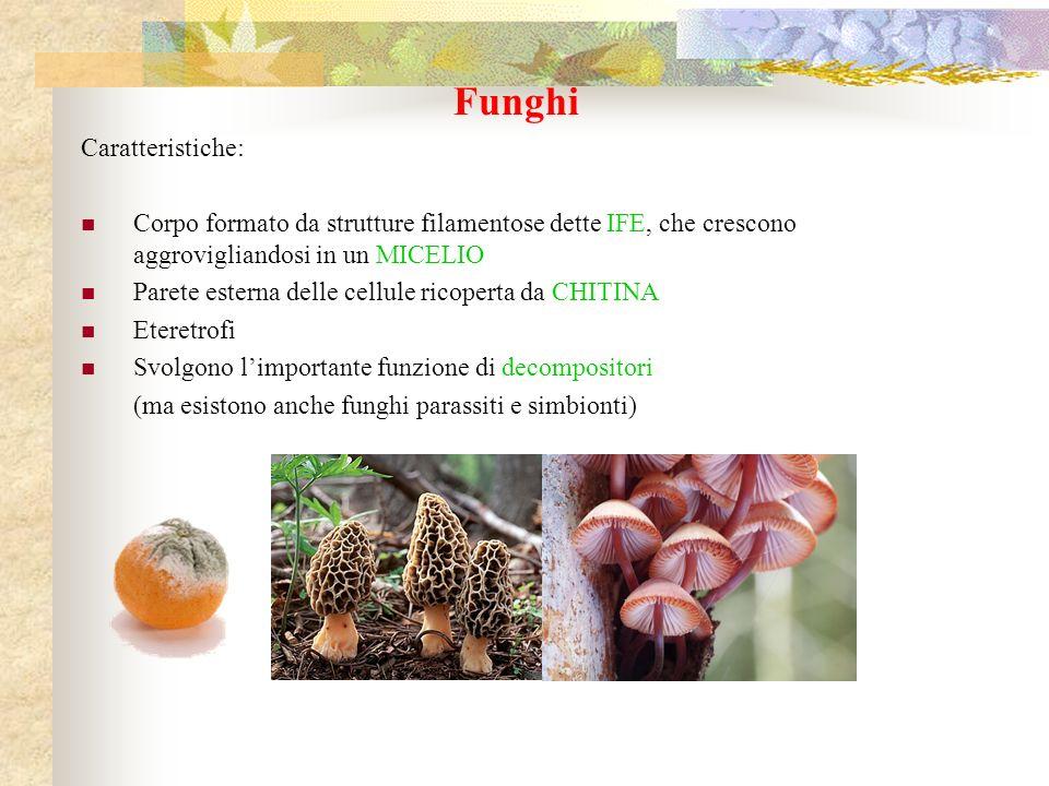 Funghi Caratteristiche: