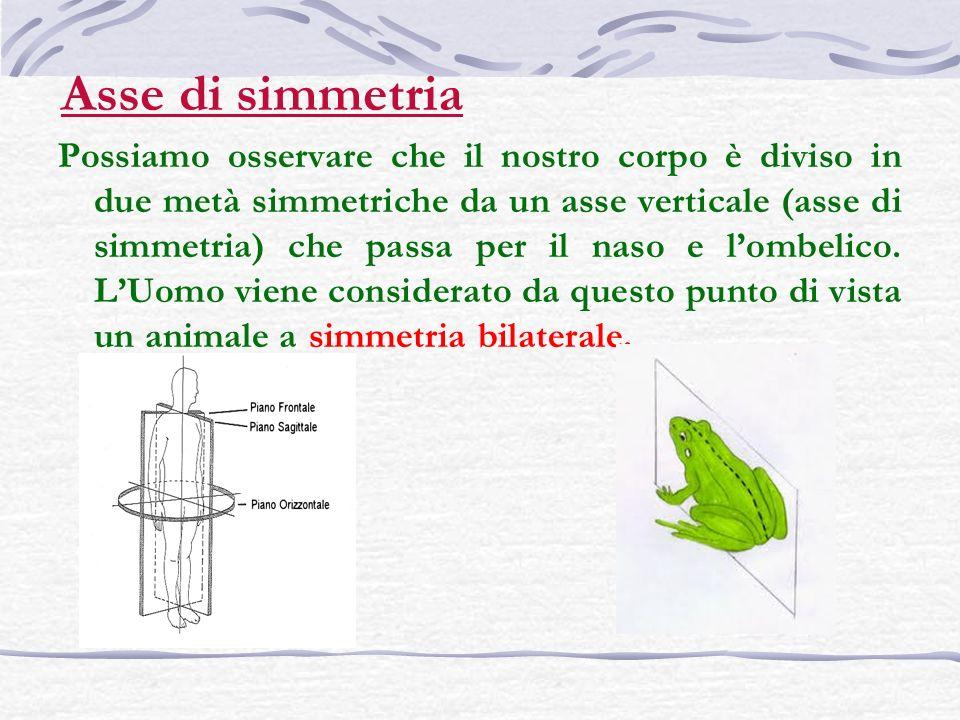 Asse di simmetria