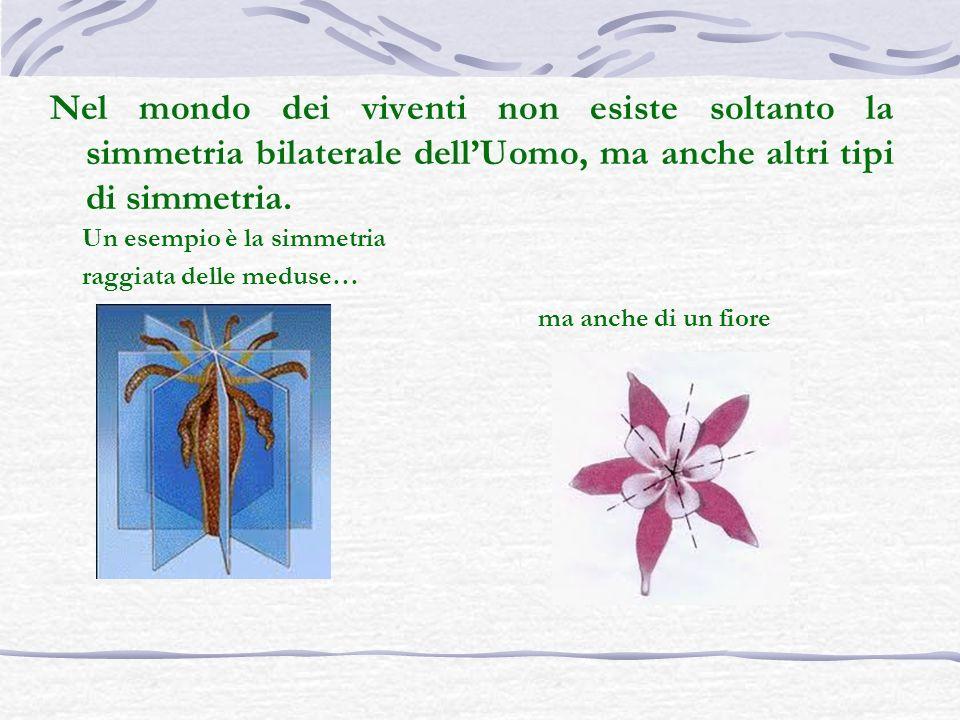 Nel mondo dei viventi non esiste soltanto la simmetria bilaterale dell'Uomo, ma anche altri tipi di simmetria.