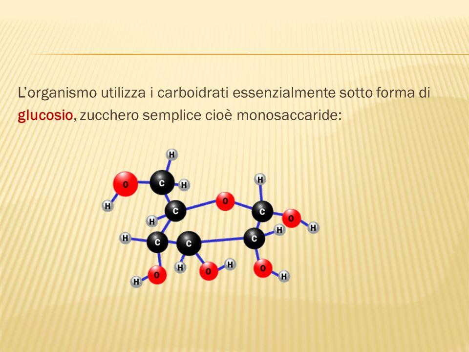 L'organismo utilizza i carboidrati essenzialmente sotto forma di glucosio, zucchero semplice cioè monosaccaride: