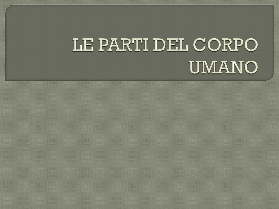 LE PARTI DEL CORPO UMANO