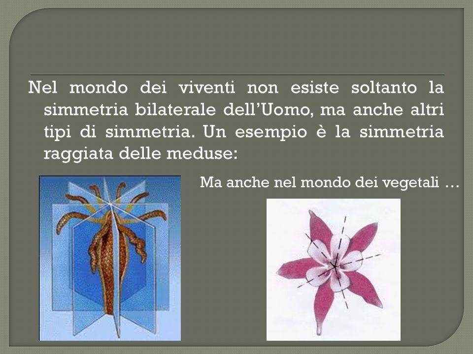 Nel mondo dei viventi non esiste soltanto la simmetria bilaterale dell'Uomo, ma anche altri tipi di simmetria. Un esempio è la simmetria raggiata delle meduse: