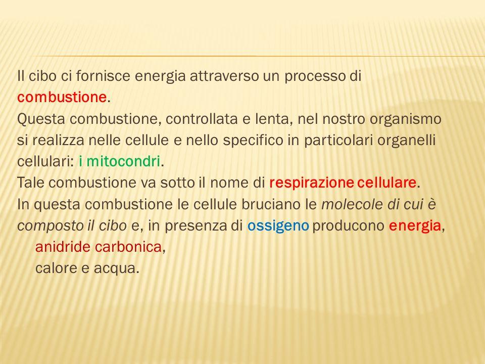 Il cibo ci fornisce energia attraverso un processo di combustione