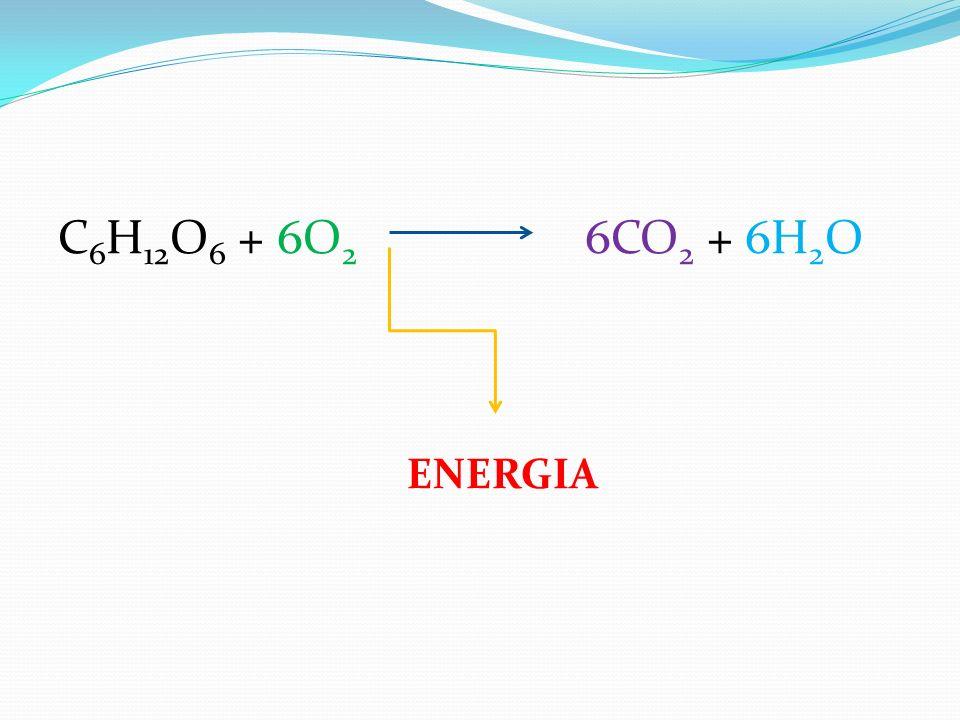 C6H12O6 + 6O2 6CO2 + 6H2O ENERGIA
