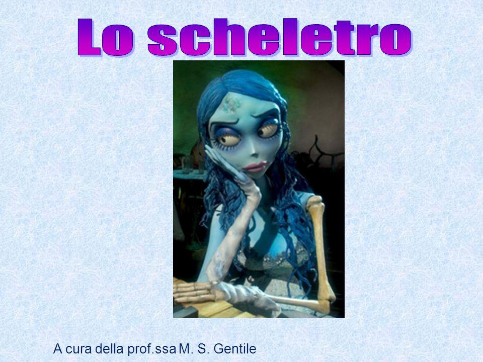 Lo scheletro A cura della prof.ssa M. S. Gentile