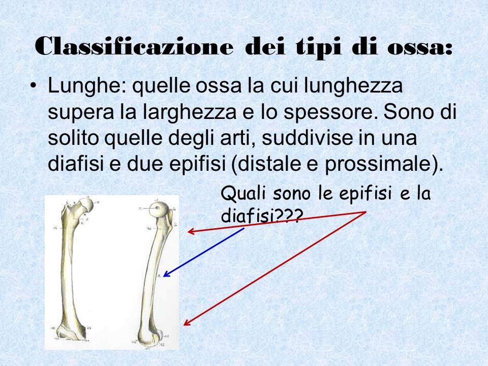 Classificazione dei tipi di ossa: