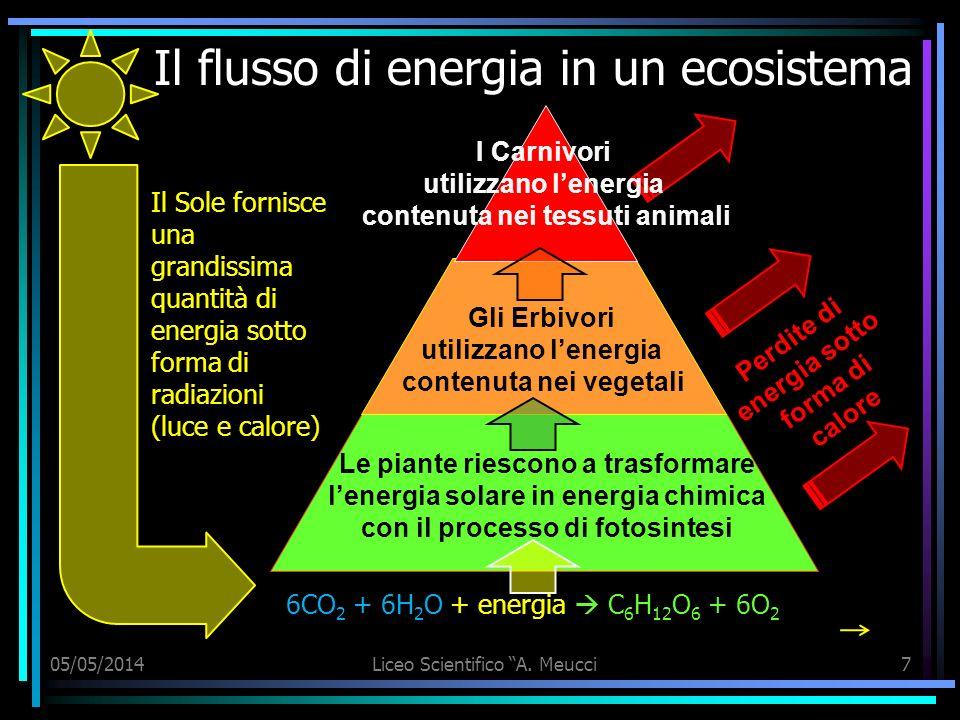 Il flusso di energia in un ecosistema