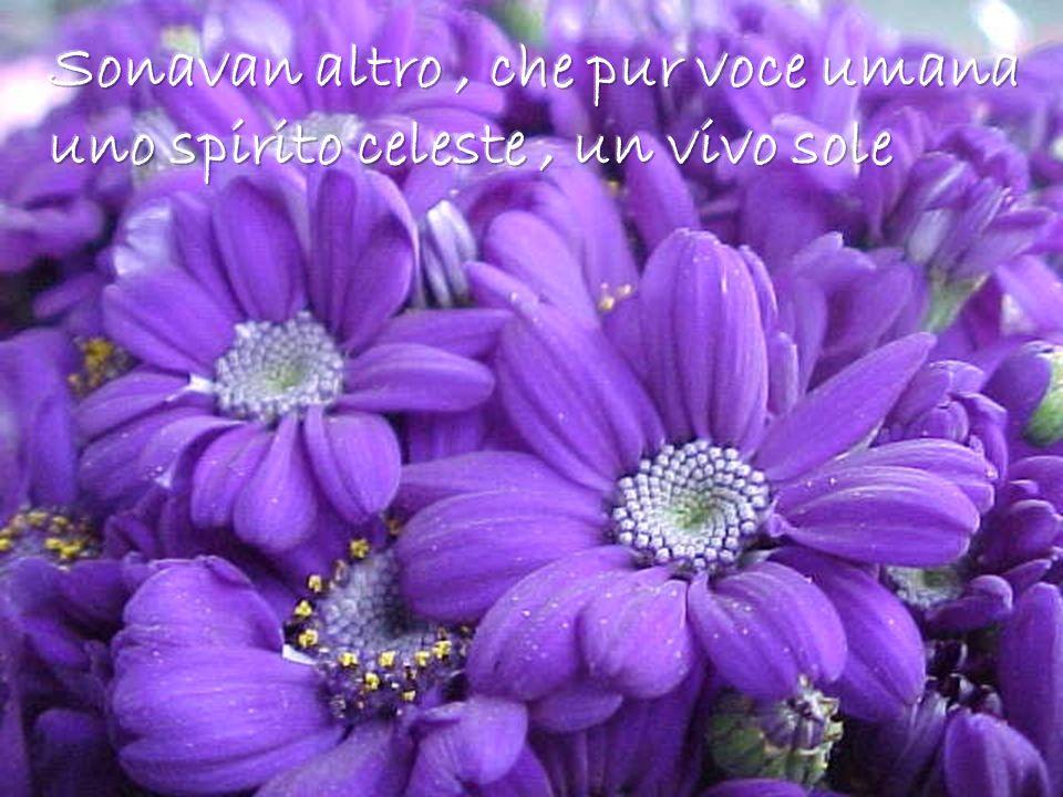 Sonavan altro , che pur voce umana uno spirito celeste , un vivo sole