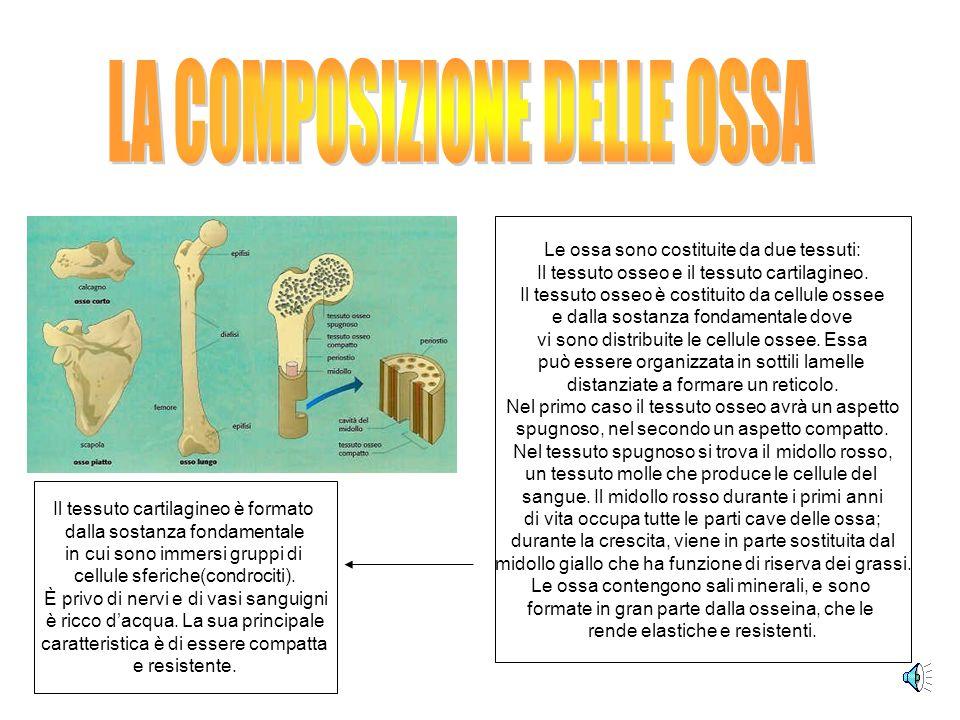 LA COMPOSIZIONE DELLE OSSA