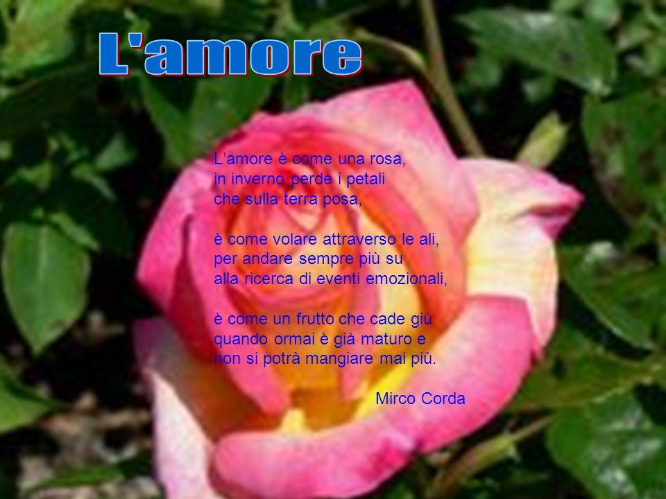 L amore L'amore è come una rosa, in inverno perde i petali
