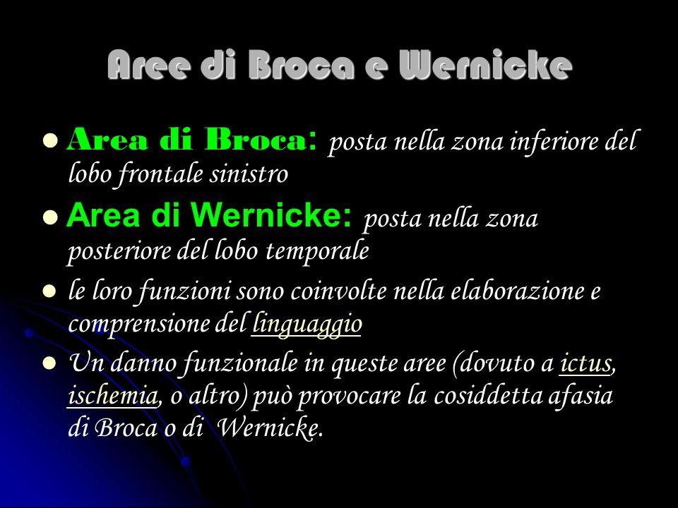 Aree di Broca e Wernicke